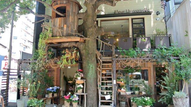 憧れのツリーハウス!ドラマで使われたカフェでヘルシーランチ
