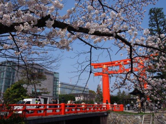 京都の桜スポットでお花見ランチ!使えること間違いなしの5軒