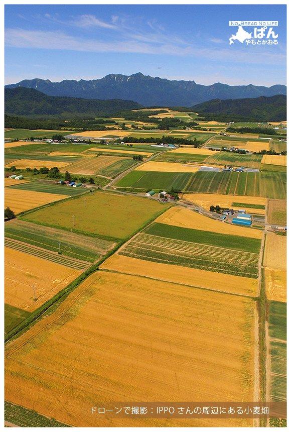 富良野に来たらパンを買って小麦畑に!産地だからこそできる貴重な体験を
