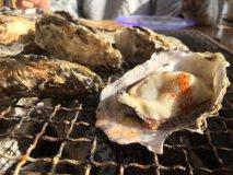 殻付き牡蠣を炭火焼きで好きなだけ!冬限定・漁港で獲れたて牡蠣食べ放題