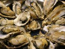 牡蠣好きの天国!牡蠣に逸品料理60種が3000円で食べ飲み放題のお店