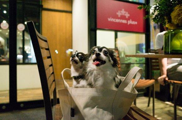 名古屋めしから世界一のピッツァまで!話題の観光地・大須で愛犬可のお店